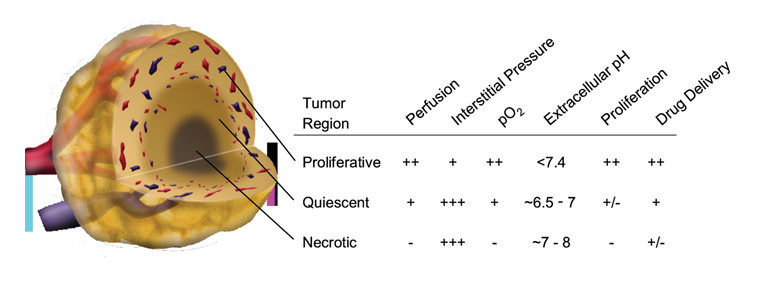 Schematic of three microenvironmental regions in a centrally necrotic tumor.