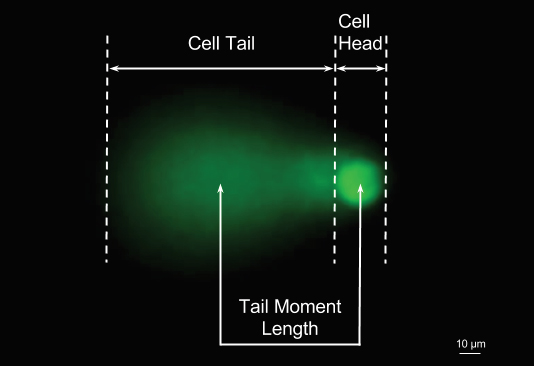 Comet areas included in comet tail moment calculation.