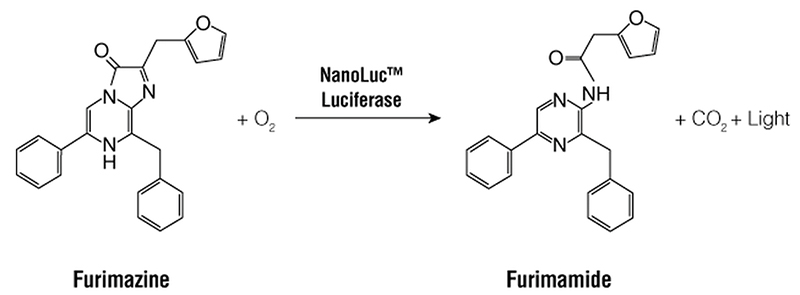 Bioluminescent reaction catalyzed by NanoLuc luciferase.
