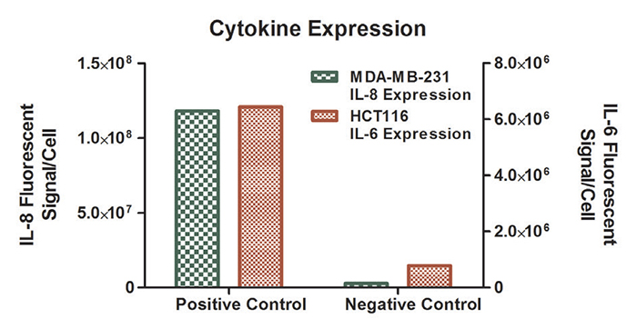 Fluorescent signal per cell from IL-8 expression in MDAMB- 231 cells and IL-6 expression in HCT116 cells.