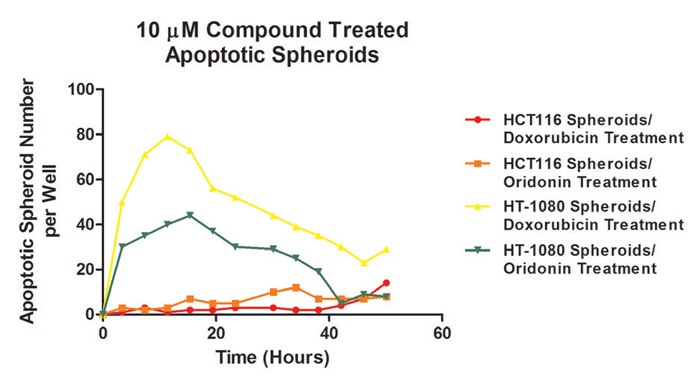 Apoptotic HCT116 and HT-1080 spheroid analysis over time after treatment with 10μM doxorubicin or oridonin.