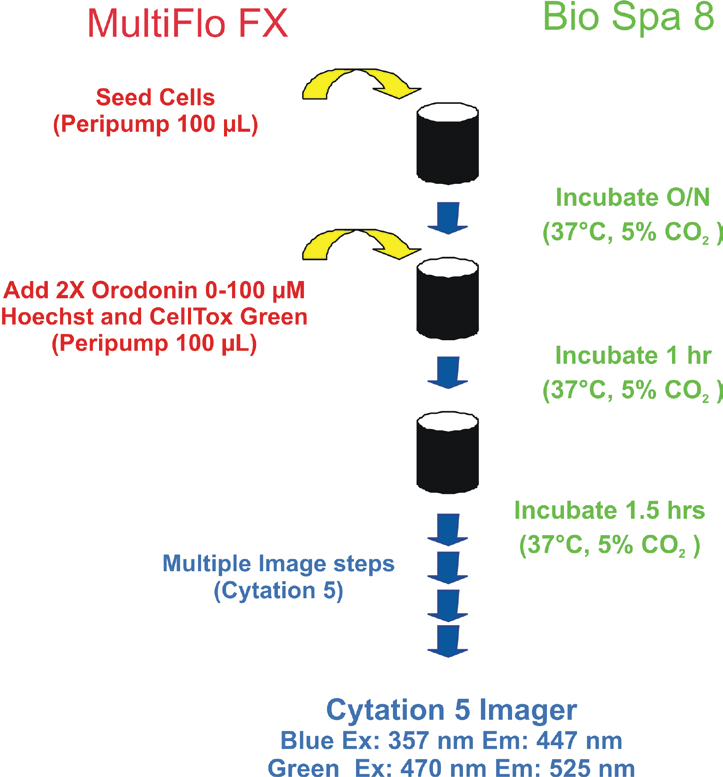 Assay Process steps of a Cytotoxicity Assay with Multiple Imaging Steps.