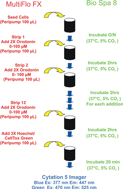 Assay Process steps of a Cytotoxicity Assay with Multiple Reagent Additions.