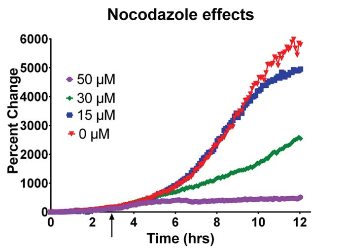 Kinetic growth curves of yeast cells perfused with Nocodazole