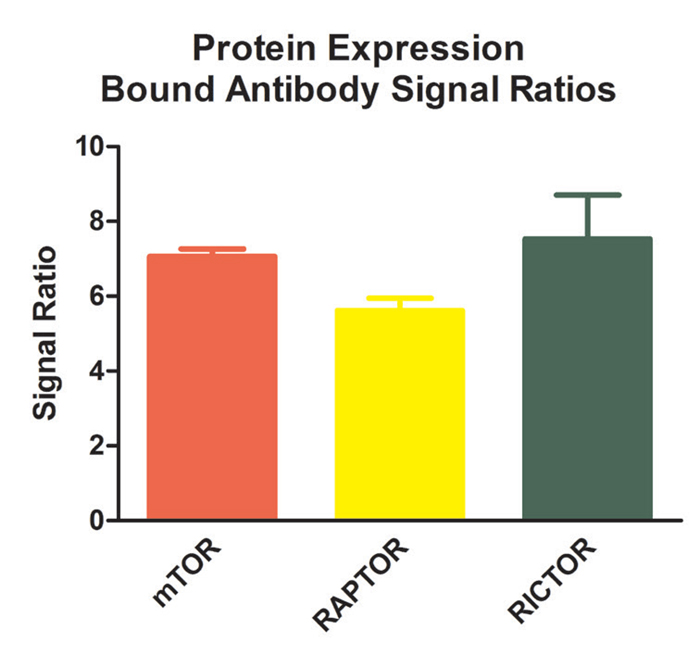 Protein expression quantification.