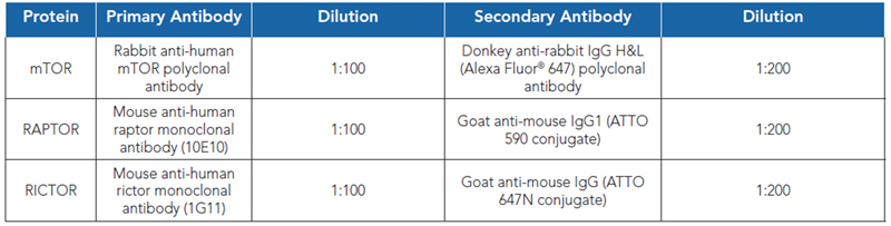 Protein Primary and Secondary Antibodies.
