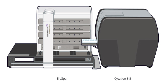 BioSpa™ Live Cell Imaging System consisting of BioSpa 8 Automated Incubator (left) and Cytation™ 5 Cell Imaging Multi-Mode Reader (right) used to automate the cell mediated cytotoxicity assays.