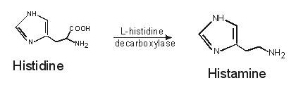 Formation of histamine by the enzymatic decarboxylation of the amino acid histidine.