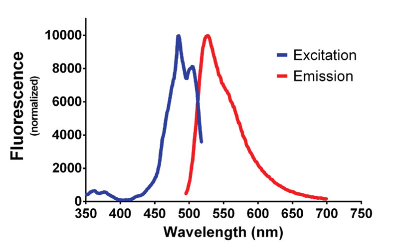 Fluorescent excitation and emission spectrum of dsDNA