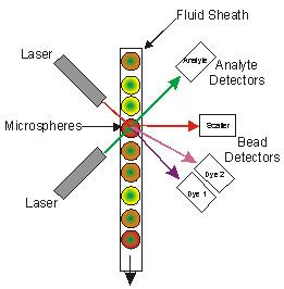 Schematic of the Detection Process of the xMAP Assays by the Luminex Reader. Materials and Methods