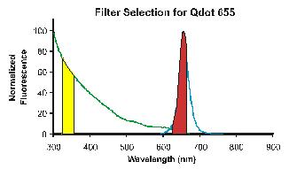 Filter Selection Based on Fluorescent Scans.