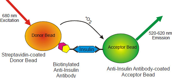 Schematic of Human Insulin AlphaLISA Assay.