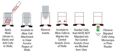 Oris™ Cell Migration Assay Schematic.