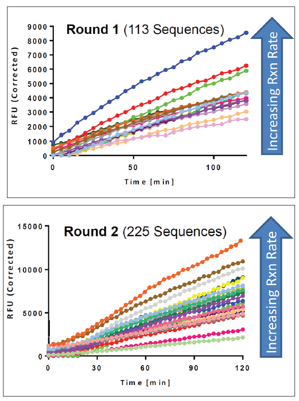 Optimization of degenerate peptide sequences