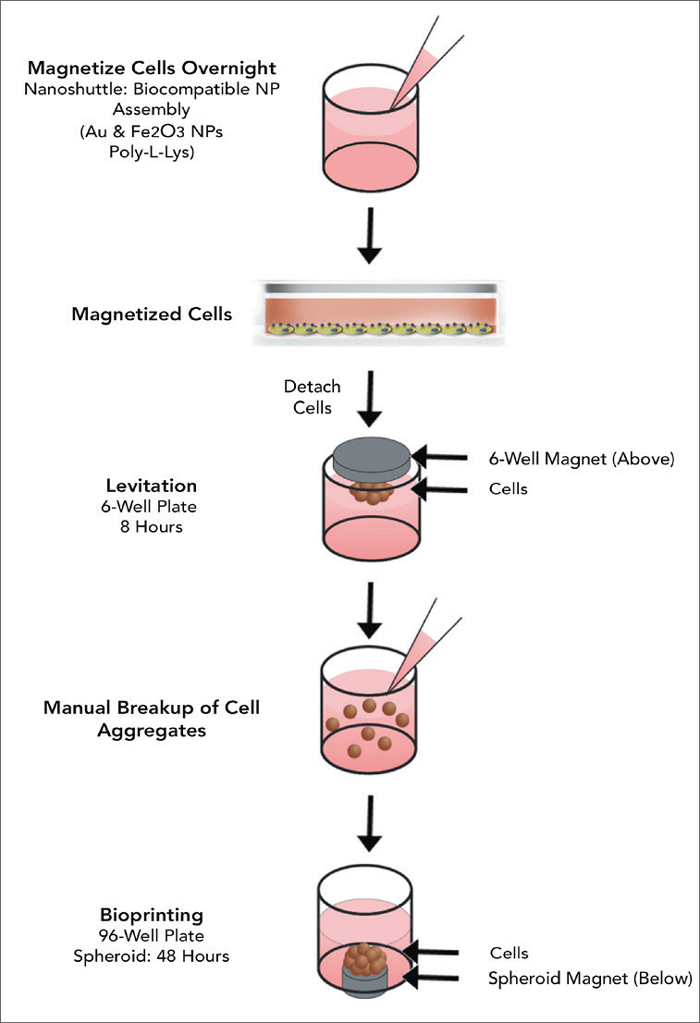 Figure 1. 96-Well BiO Assay™ Kit protocol.