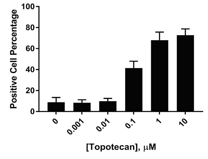 Positive DNA damaged cell percentage from U373 cells exposed to various topotecan concentrations.