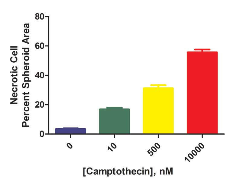 Plot of percent spheroid area covered by affected necrotic cells following camptothecin treatment.