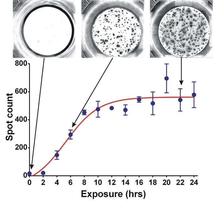 The Effect of Stimulation Exposure time on IL-2 secretion.