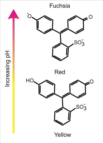 Structure of Phenol red and different pH levels