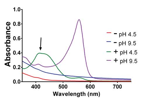 Absorbance spectra of DMEM culture media with and without phenol red.