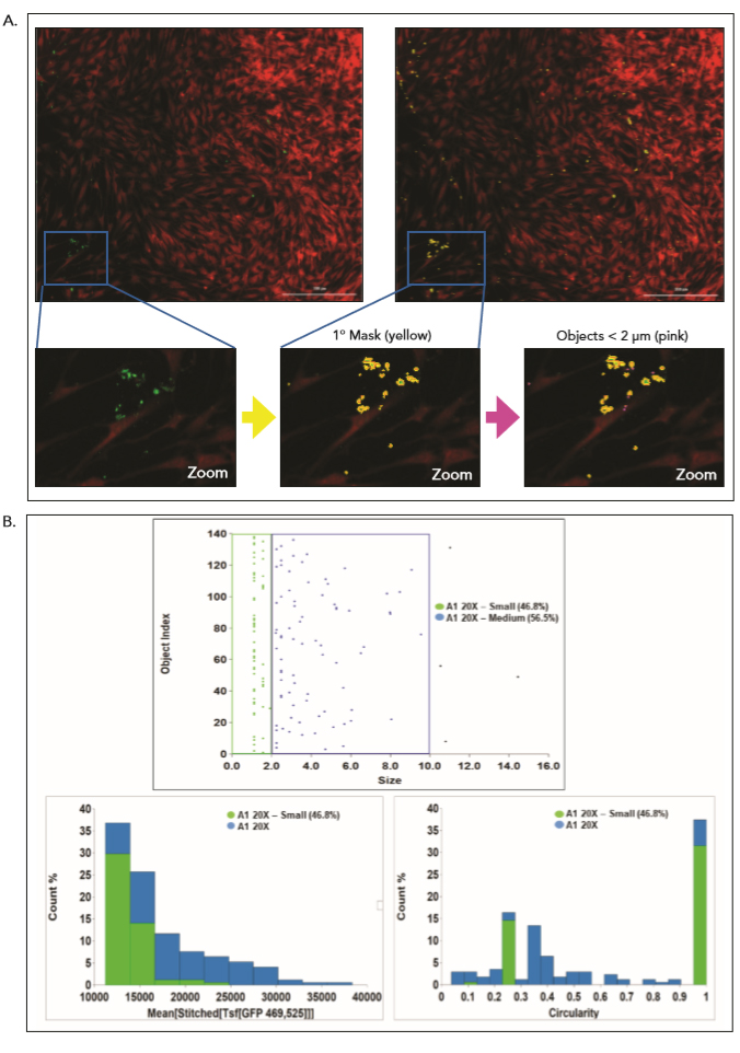 Characterizing non-specific staining in negative controls