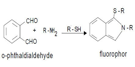 Reaction of OPA and primary amino groups