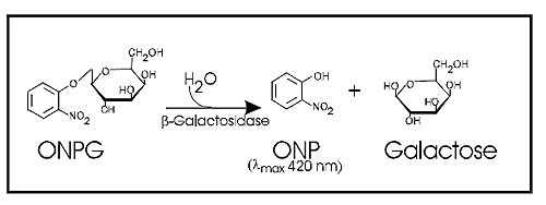 Enzymatic hydrolysis of o-nitrophenol-ß-D-galactoside (ONPG) to of o-nitrophenol (ONP) and galactose by ß-galactosidase