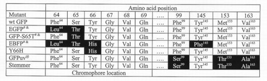 GFP mutants and their amino acid substitutions