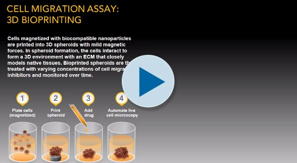 Cell Migration Assay: 3D Bioprinting Visual Abstract
