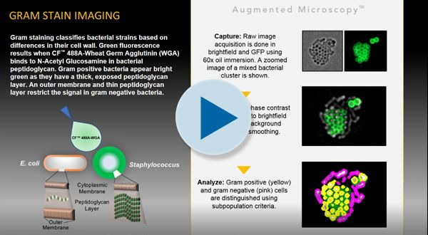 Gram Stain Imaging Visual Abstract