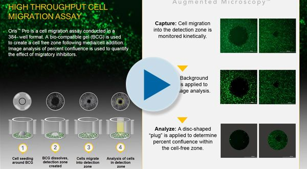 High Throughput Cell Migration Assay