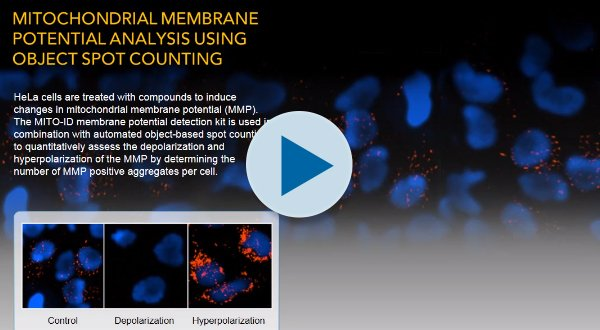 Mitochondrial Membrane Potential Analysis Using Object Spot Counting