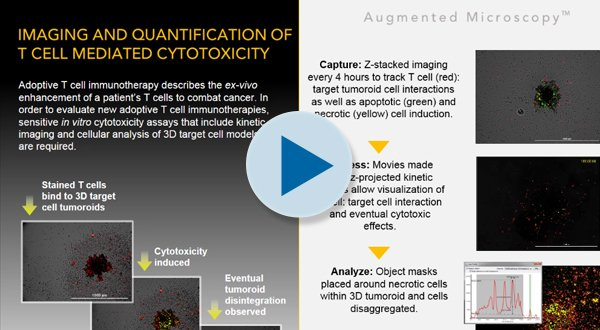 T cell mediated cytotoxicity