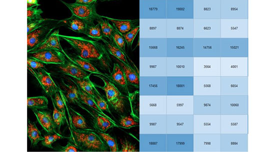 Combined digital microscopy and multi-mode detection