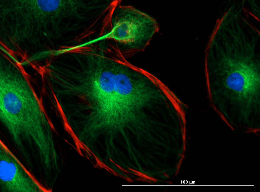 Explore, image and analyze intra-and inter-cellular activity