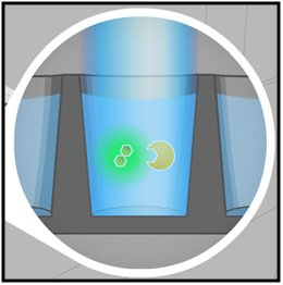Molecules are excited with light. Unbound small  molecules emit depolarized light.