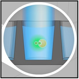 Small molecules bound to larger ones emit polarized light.
