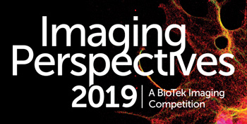 Imaging perspectives 2019