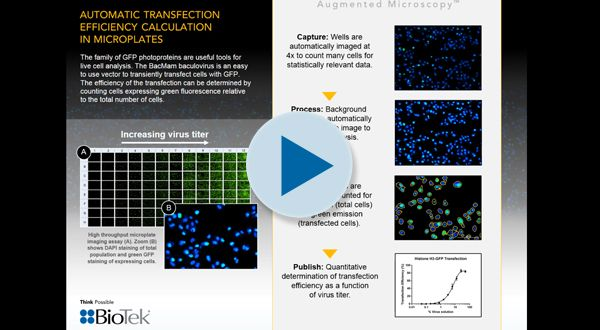 Automatic Transfection Efficiency Calculation in Microplates